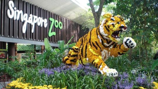 Экскурсия Ночное сафари в Сингапуре