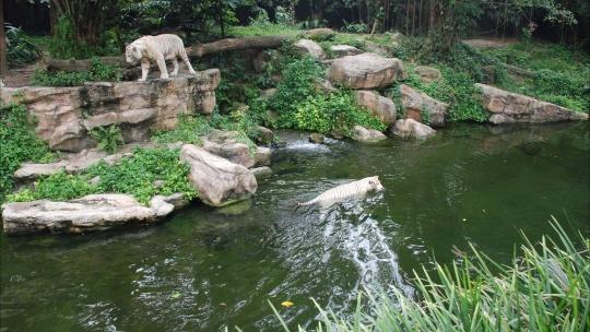 Экскурсия Сингапурский Зоопарк в Сингапуре