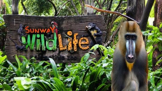 Экскурсия Парк развлечений Sunway Lagoon в Куала-Лумпуре