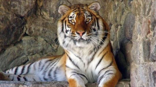 Экскурсия Национальный зоопарк в Куала-Лумпуре