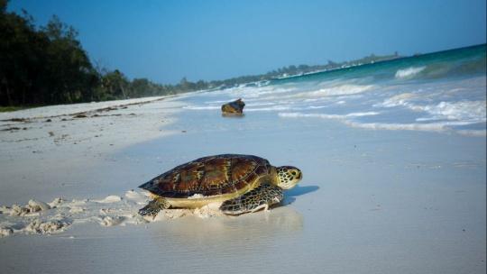 Экскурсия С черепахового пляжа в сад тропических фруктов  по Пинангу