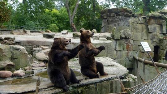 Калининградский зоопарк по Калининграду