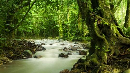 Экскурсия Приключения в джунглях по Острову Лангкави