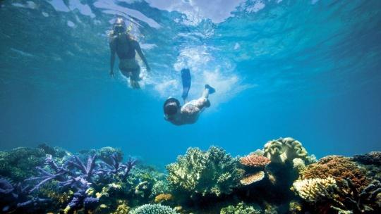 """Экскурсия Подводный мир острова """"Паяр"""" по Острову Лангкави"""
