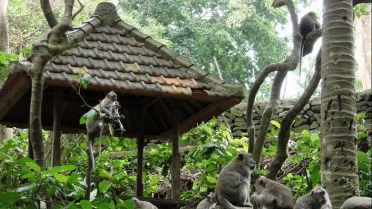 Лес обезьян на Бали по Убуде