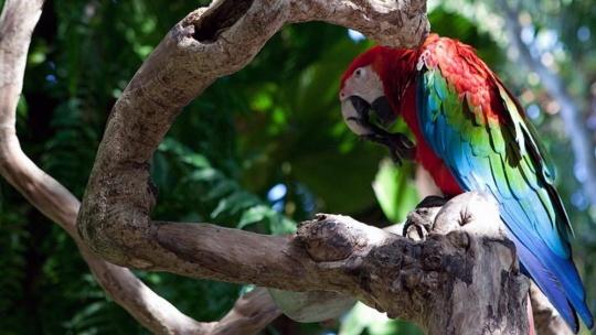 Парк птиц и рептилий в Таман Бурунг на Бали