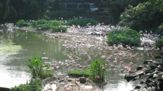 Джуронг (парк птиц) в Сингапуре