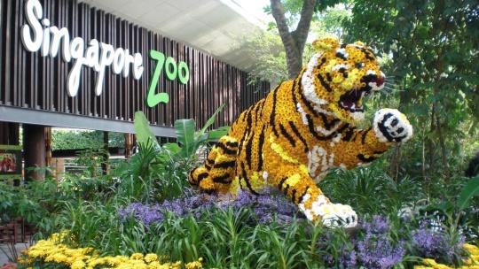 Зоопарк Сингапура в Сингапуре