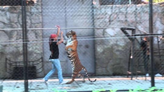 Аквариум и тигровый зоопарк по Самуи
