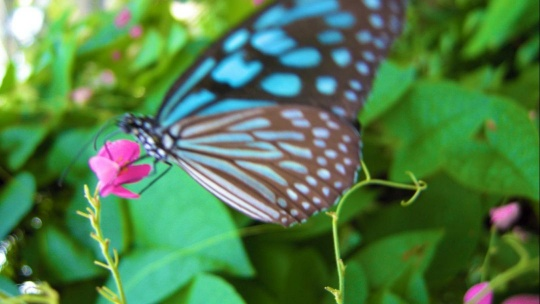 Сад бабочек и музей насекомых по Самуи