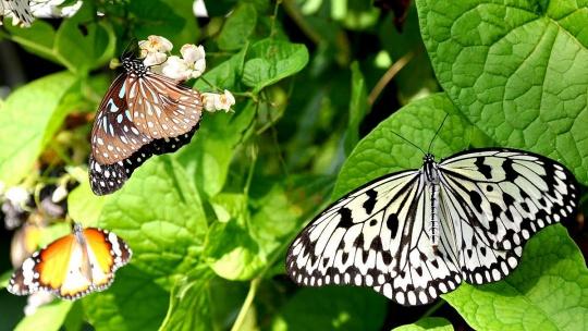Сад бабочек и королевство насекомых по Самуи