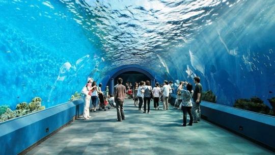 Подводный мир по Севастополю