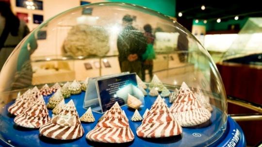 Музей морских раковин в Пхукете