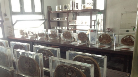 Музей медицины в Бангкоке
