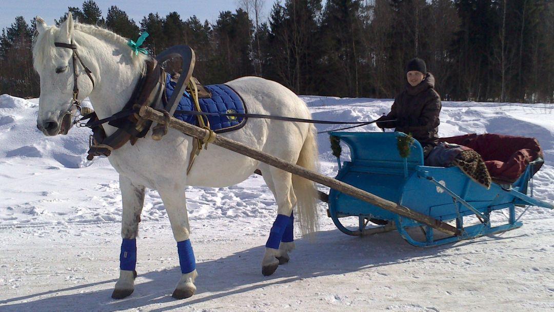 Экскурсия на лошадях на оленью ферму - фото 2