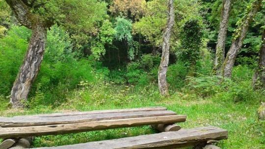 Дендрологический парк Кудепста - фото 2