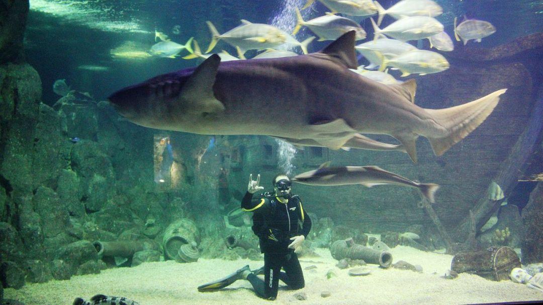Океанариум в Адлере - фото 2