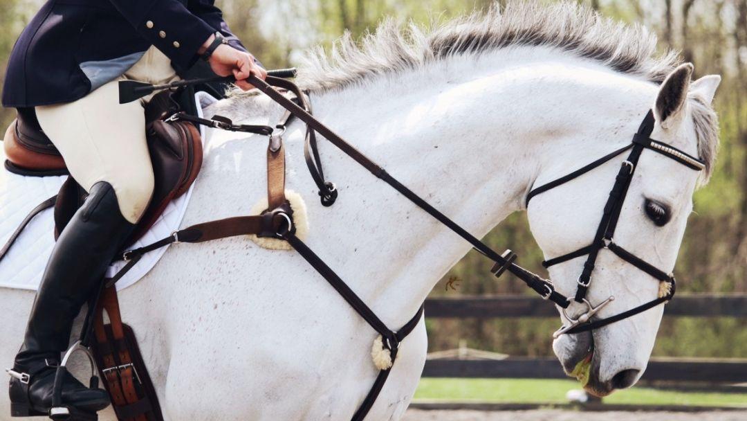 Верховая езда на лошади - фото 2
