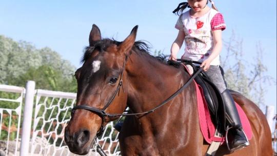 Верховая езда на лошади - фото 3