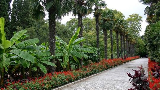 Никитский Ботанический сад и кактусовая оранжерея - фото 2