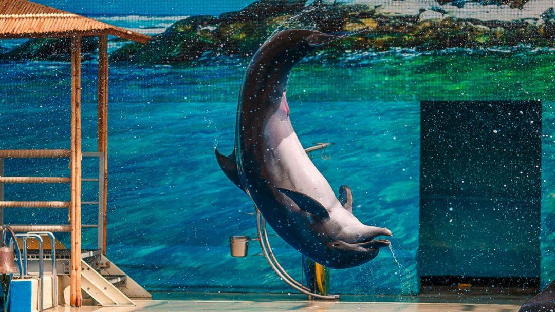 Дельфинарий Утришский - фото 2