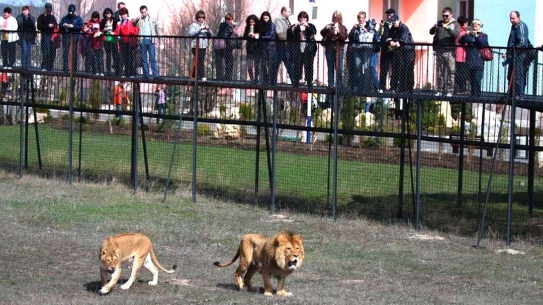 """Парк львов """"Тайган"""" - фото 3"""