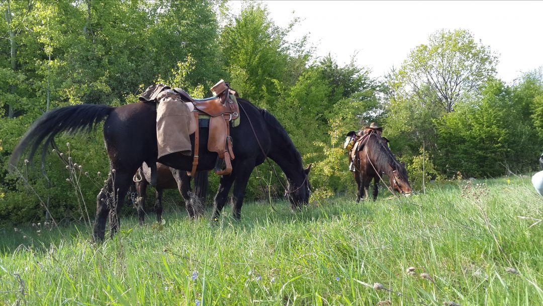 Конные прогулки в окрестностях Ялты - фото 3
