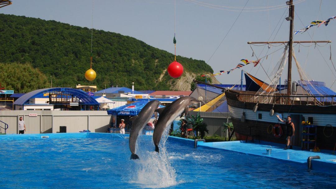 Экскурсия Архипо-Осиповский дельфинарий