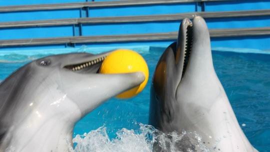 Архипо-Осиповский дельфинарий - фото 3