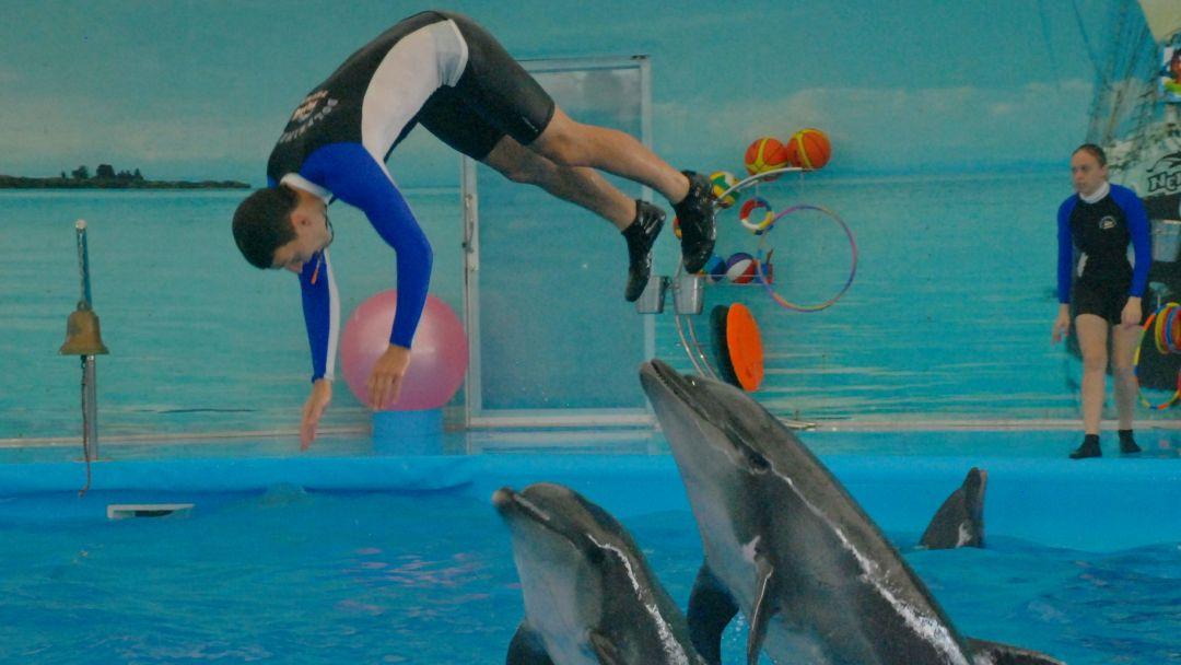 Шоу дельфинов  в Пхукете