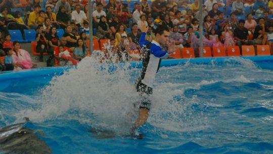 Шоу дельфинов  - фото 2