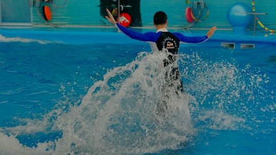 Шоу дельфинов  - фото 3