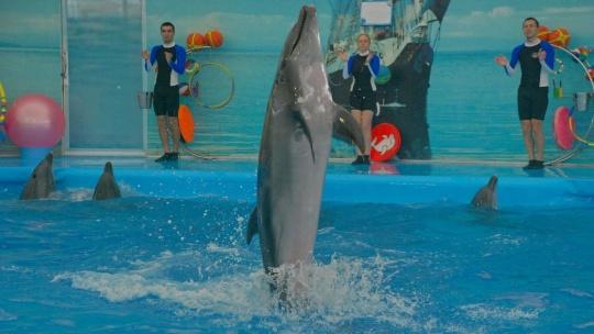 Шоу дельфинов  - фото 5