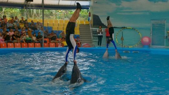 Шоу дельфинов  - фото 6