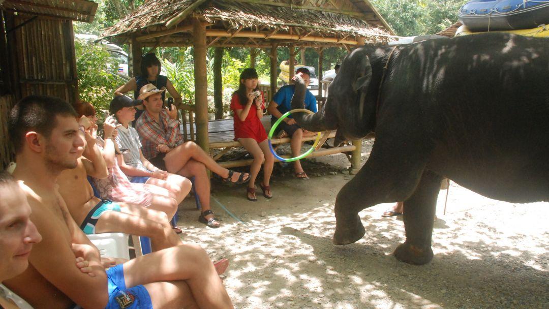 Рафтинг + Слоны + Квадроциклы - фото 8