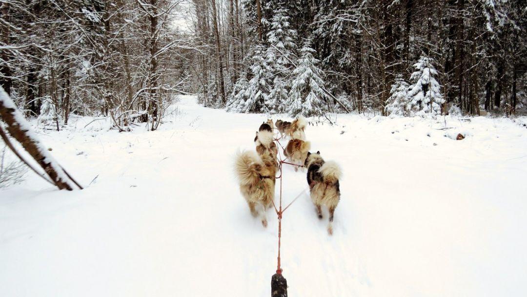Зимняя программа «Русская Аляска» - фото 7