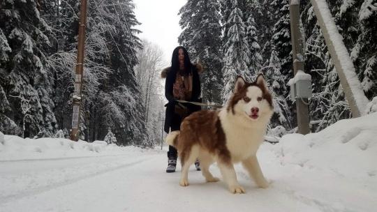 Дог-треккинг (поход с собаками)+ экскурсия по центру питомника - фото 4