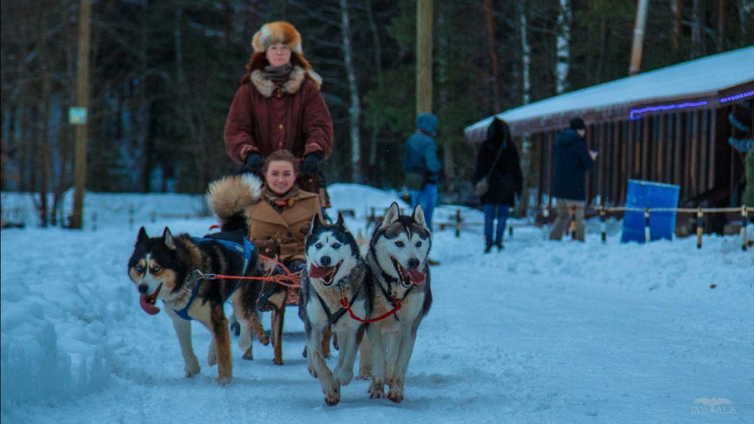 Дог-треккинг (поход с собаками)+ экскурсия по центру питомника - фото 7