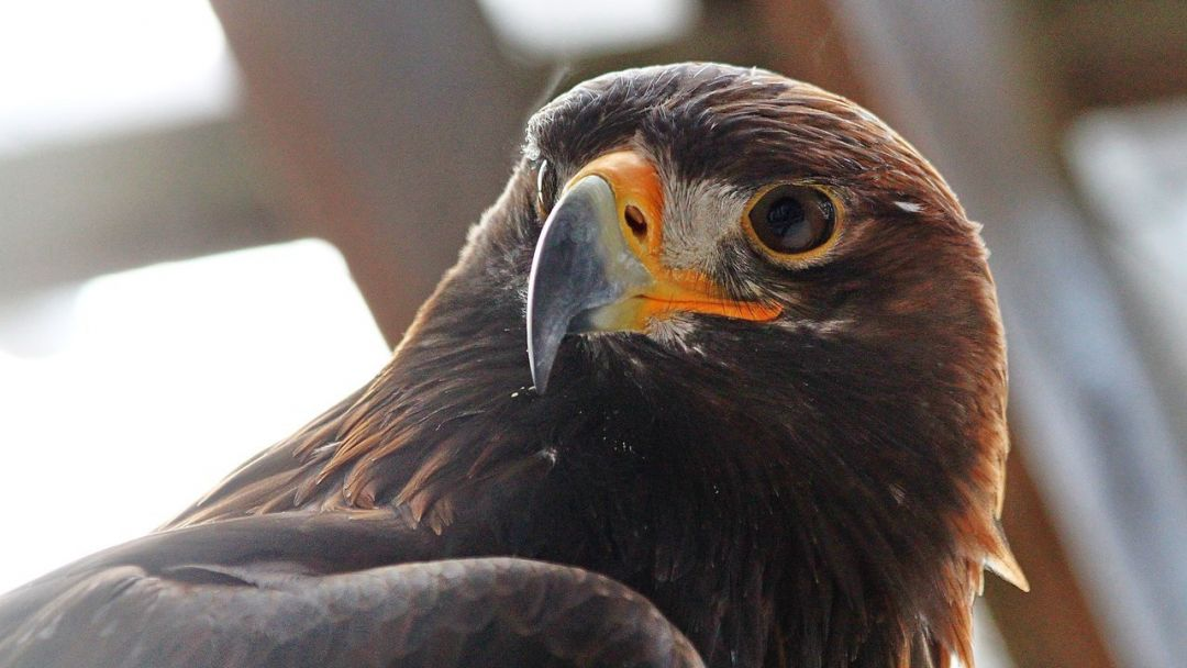 Холзан - питомник хищных птиц - фото 1