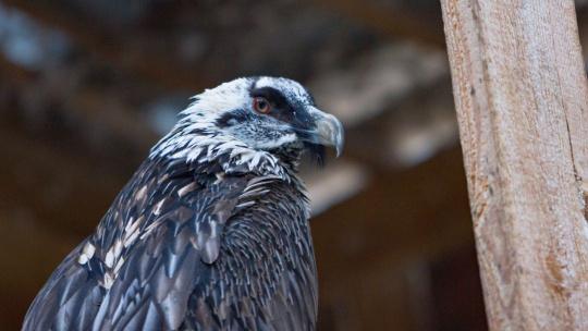 Холзан - питомник хищных птиц - фото 2