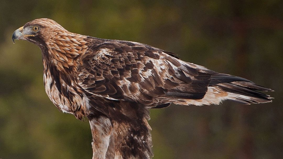 Холзан - питомник хищных птиц - фото 3