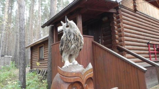 Холзан - питомник хищных птиц - фото 4