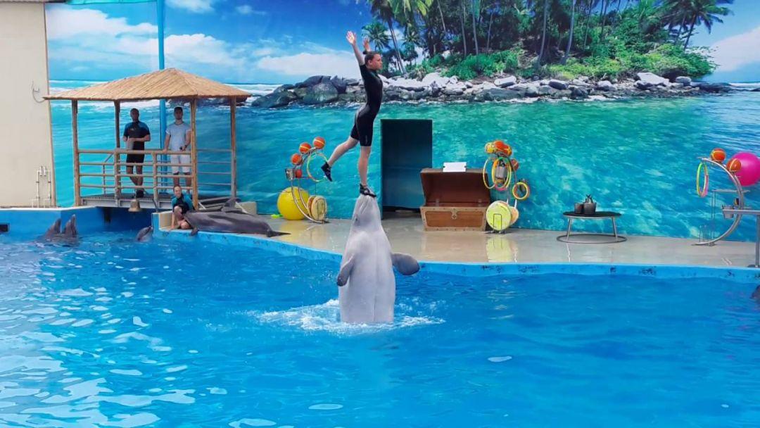 Экскурсия Дельфинарий