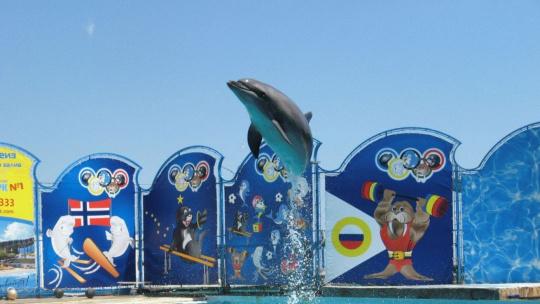 "Экскурсия Театр морских животных ""Акватория"" в Симеизе"