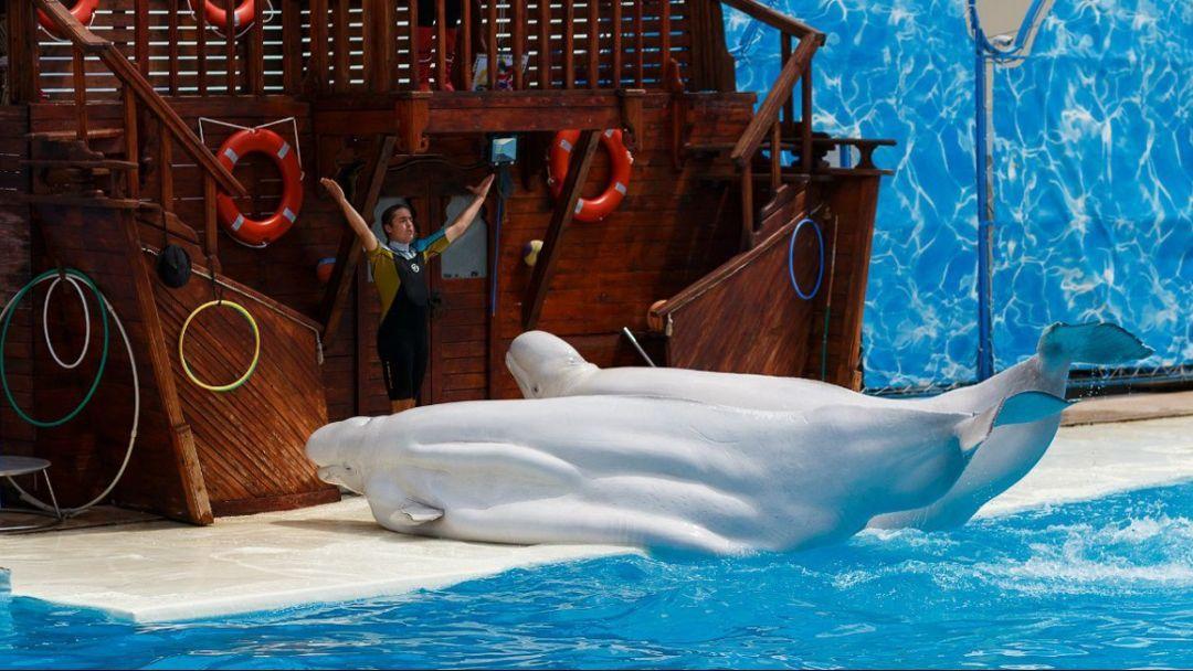 """Театр морских животных """"Акватория"""" - фото 2"""