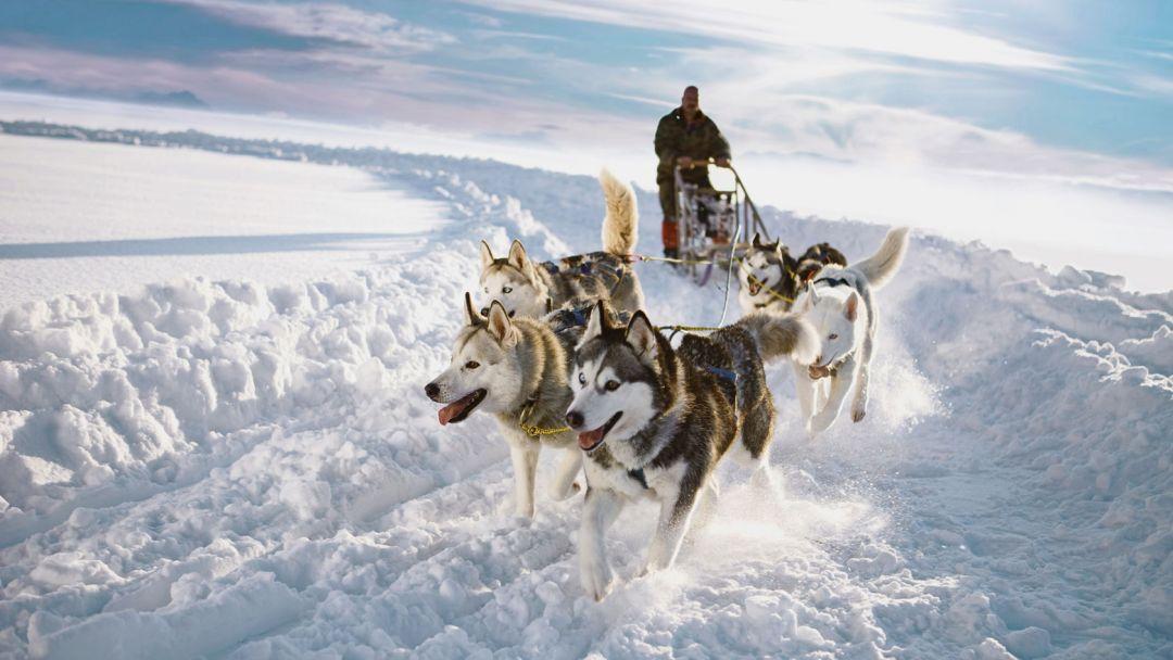 Экскурсия Путешествие по зимней тундре в санях за Хаски
