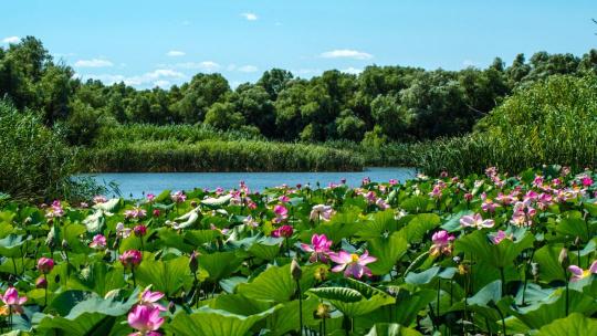 Экскурсия Экскурсия на лотосные поля по Астрахани