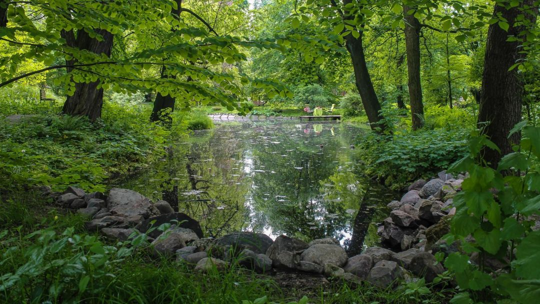 Ужин у озера в ботаническом саду - фото 3