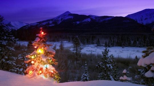 Новый год 2019 на Алтае! - фото 2