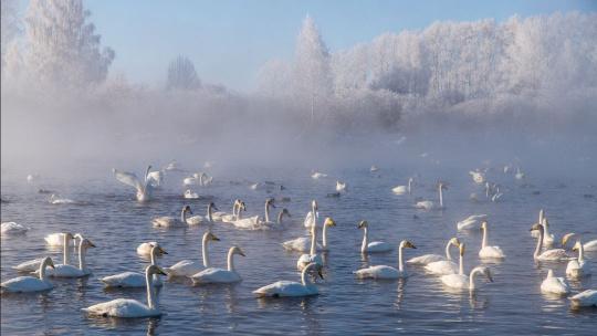 Экскурсия Поездка на Лебединое озеро по Барнаулу
